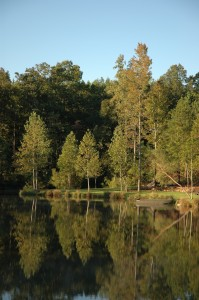 Two lakes on the property provide wildlife habitat, fishing and water for irrigation.