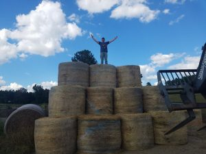 The hay wall!