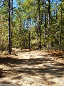 Part of the course takes runners on a winding hike through wooded trails